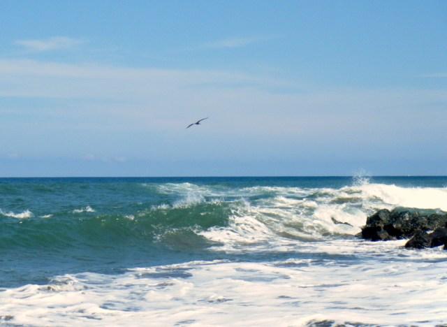 Ocean and pelican