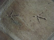 A tile with a vulture foot imprint.