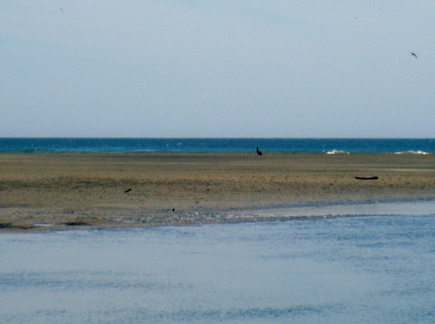 The mouth of the river with the ocean in the background.