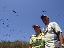 Sue and I ventured with the film crew today to see a frigatebird colony off the coast of Panama on Isla Iguana. These amazing birds can have a wingspan of almost 7 feet!