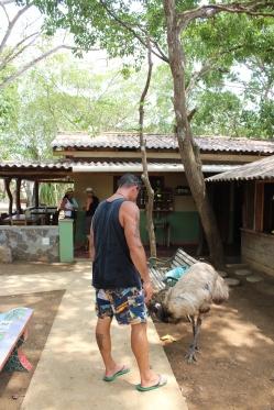 SU feeding bananas to one of the emus.