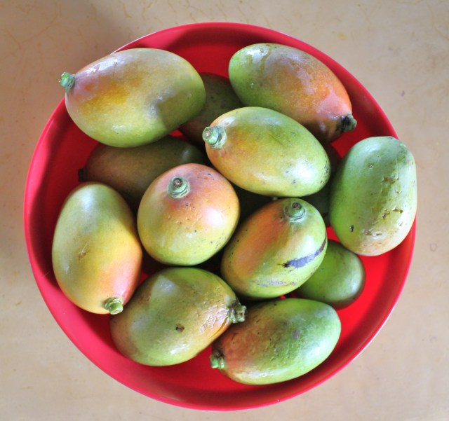 A lovely bowl of mangos.