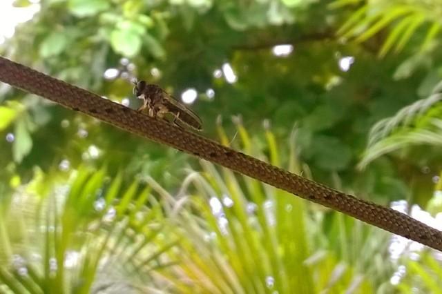 Teeny Dragonfly