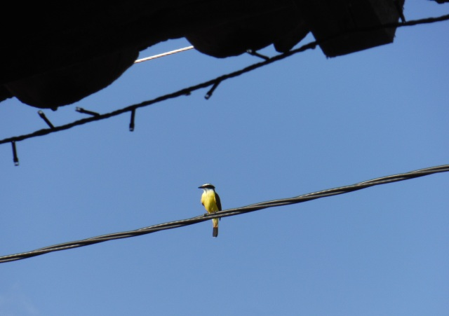 Bird on the line
