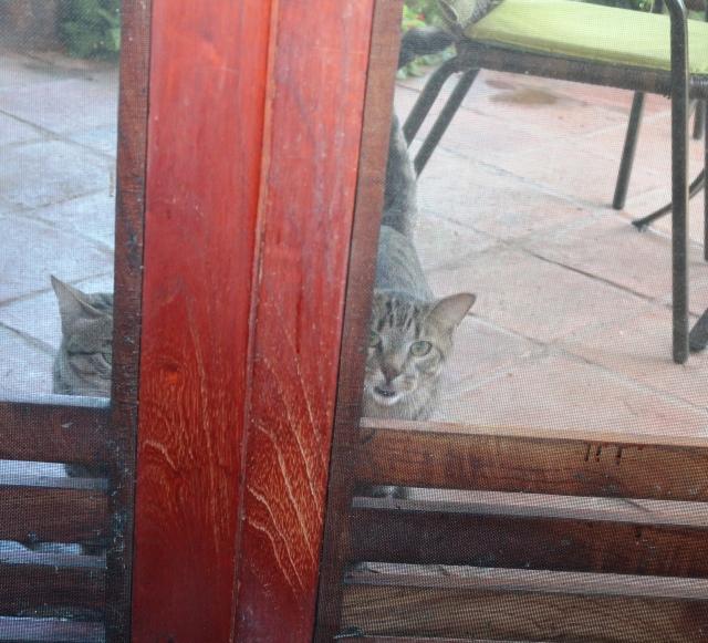 dos gatos 2