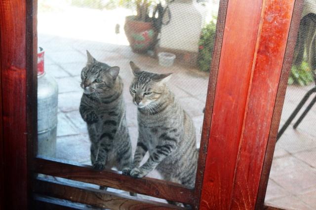 dos gatos 3
