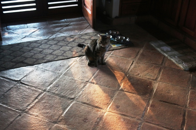 Cat in sunlight.