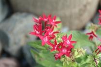 Pink Flower - soft