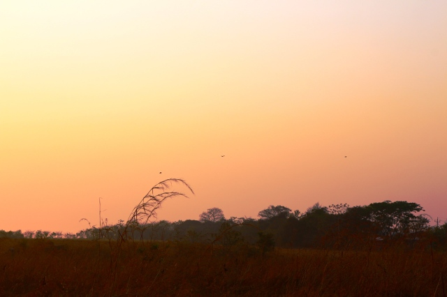 Birds at sunrise over a field
