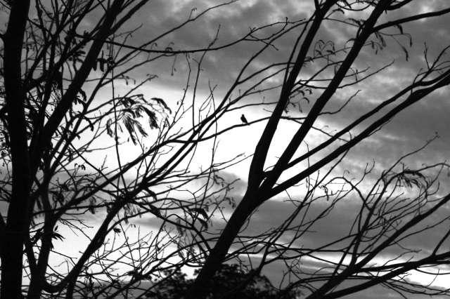 Black and white photo of a bird silhouetted in a tree.