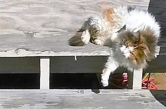 Cat Raj